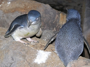 03-Male-penguin-on-left-female-penguin-on-right-wpg