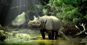javanese-rhino_950_326_cy_90